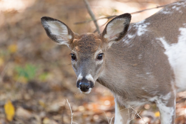 How to Avoid Deer Accidents During Hunting Season | Sam Bernstein