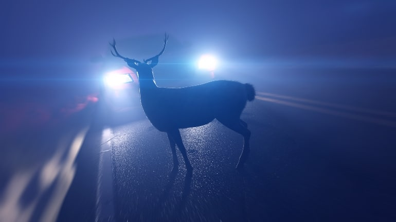 deer accidents in Michigan