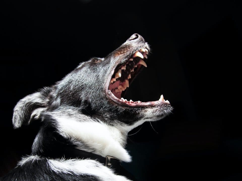 Dog attacks and receiving your dog bite settlements