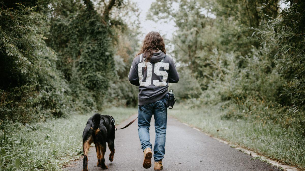 The Latest Dog BIte Statistics, man walking dog